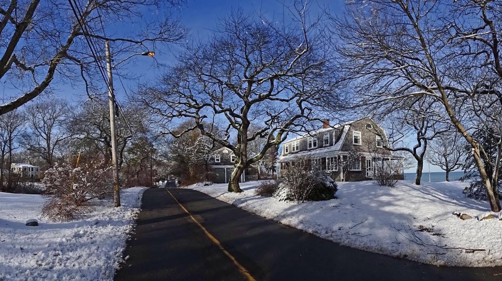 Joe's Retirement Blog: Winter Trees, Manomet, Plymouth