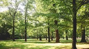 Biomassa Atas Tanah
