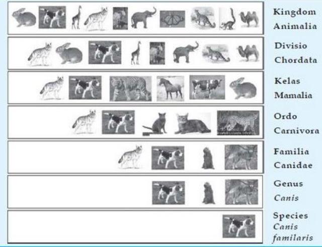 Ilmu yang mempelajari klasifikasi makhluk hidup disebut