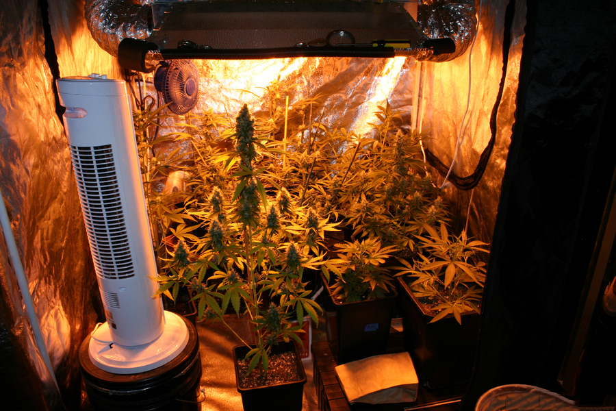 4x4x6.5 basic $199 grow tent from The Green Room JD Lighting 1000w dimmable ballast 1000w ultra sun hps bulb. Hydrotek tube cooled hood & How to set up your 4x4 grow tents - Popular Electronic cigarettes ...