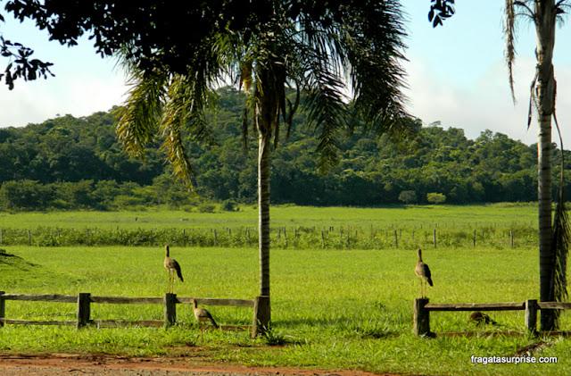 Fazenda Sucuri, Bonito, MS