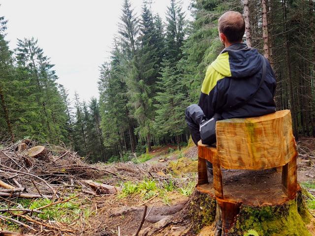 stolička, Bergen, Norsko, příroda, sedačka, les