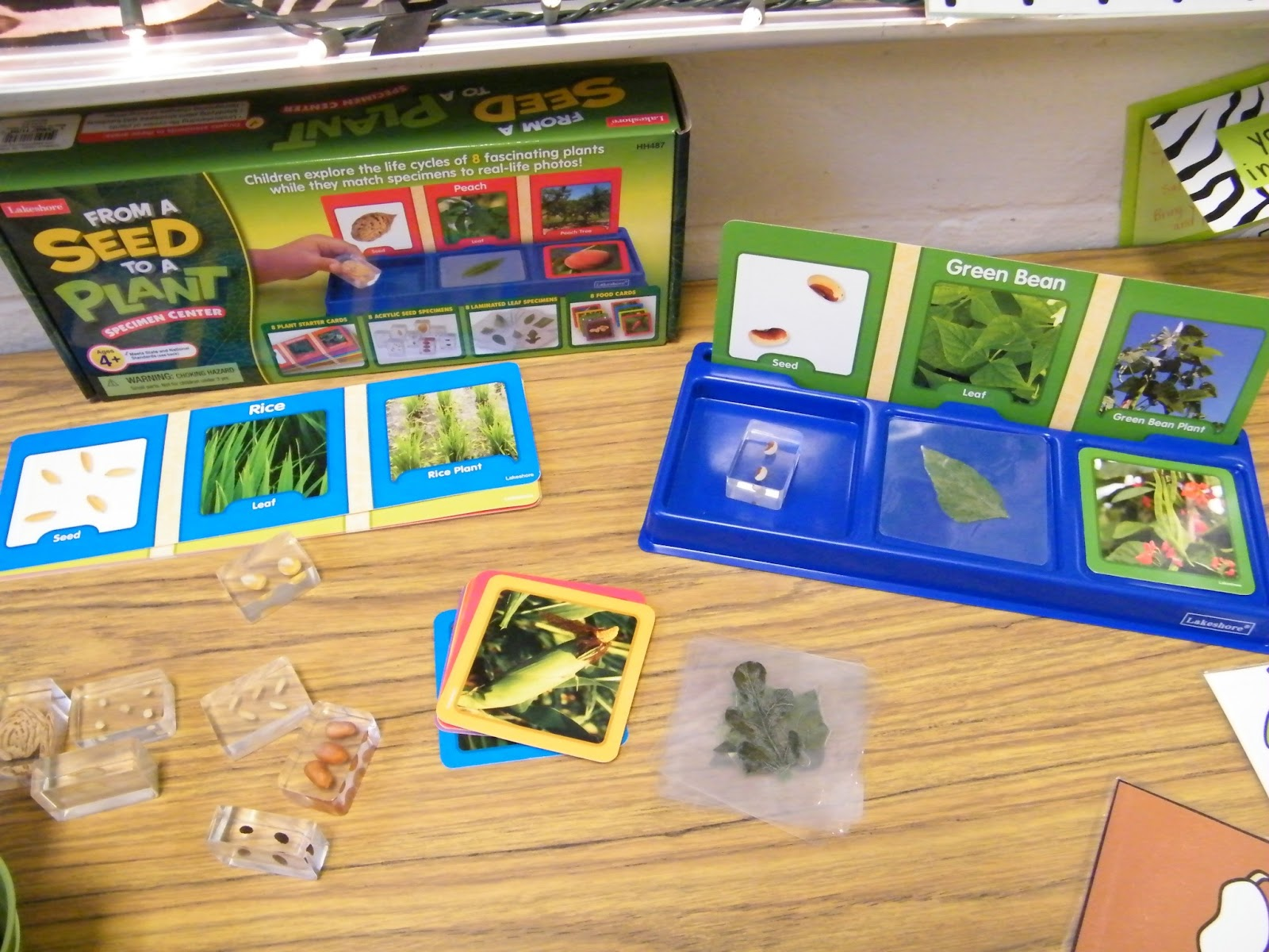 Adventures With Firsties Plants Unit In Action