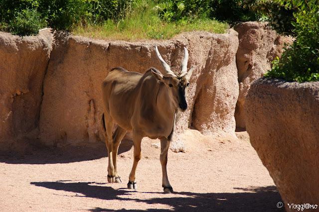 Antilope ospite nel parco