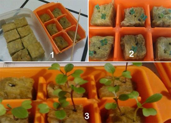 Cara Praktis Berkebun Hidroponik Dirumah Untuk Pemula