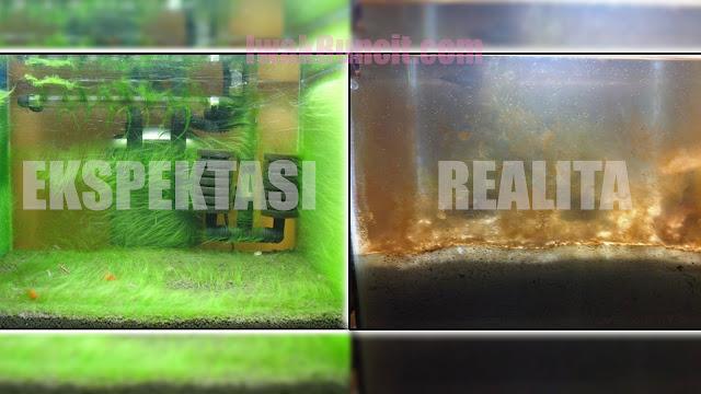 4 Penyebab Utama Munculnya Lumut Coklat Kekuningan di Aquarium Ikan Mas Koki: Para Buncit Wajib Tahu Ini!