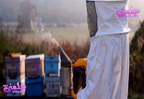كيف يتم اخماد النحل بالدخان