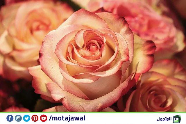 وادي الورود أو وادي الزهور المغرب