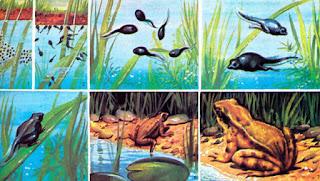 Canlıların Değişim Aşamaları