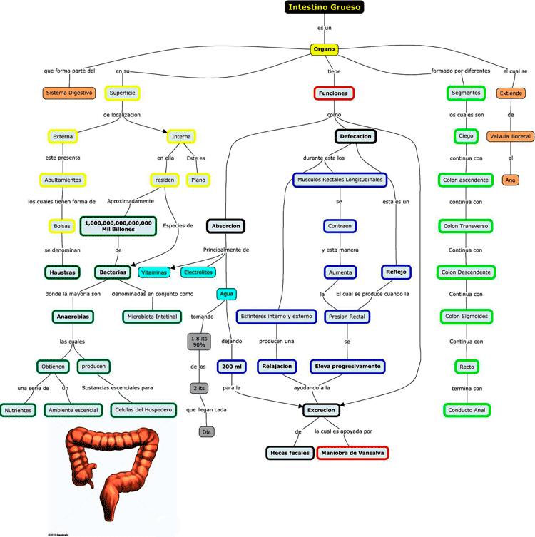 Mapa de concepto del intestino grueso