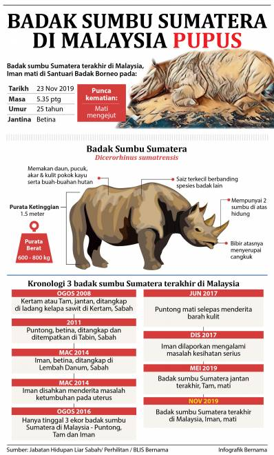 Kronologi 3 badak sumbu Sumatera terakhir di Malaysia.