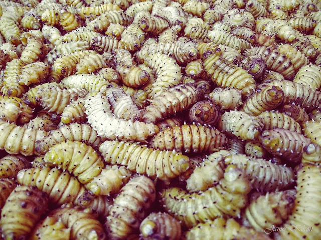 naga-food-nagaland-silk-worms