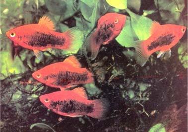 Gambar Akuarium sejenis