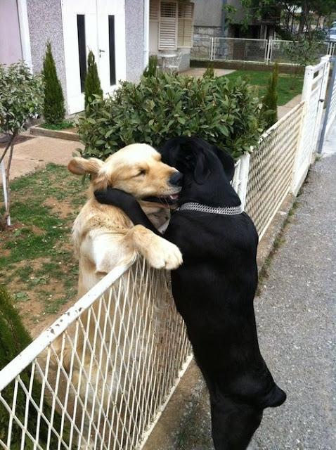 foto de abrazo entre dos perros