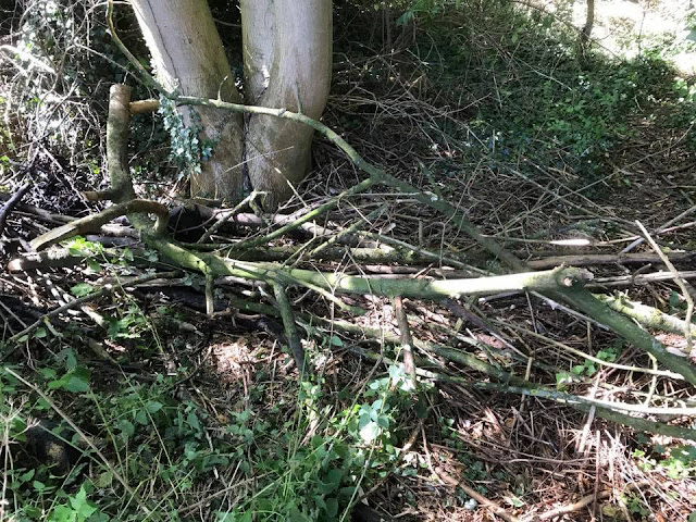 Pile of wood used to create a dead hedge