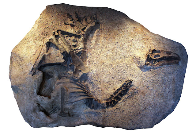 New species of Allosaurus discovered in Utah