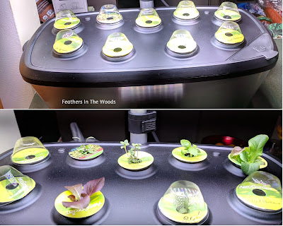 Seeds sprouting in hydroponic system