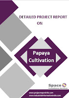 Project Report on Papaya Cultivation