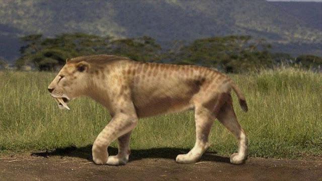 Hallan por primera vez huellas de un tigre prehistórico en Argentina