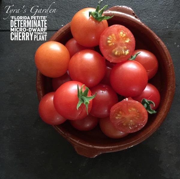 tomato Florida Petit