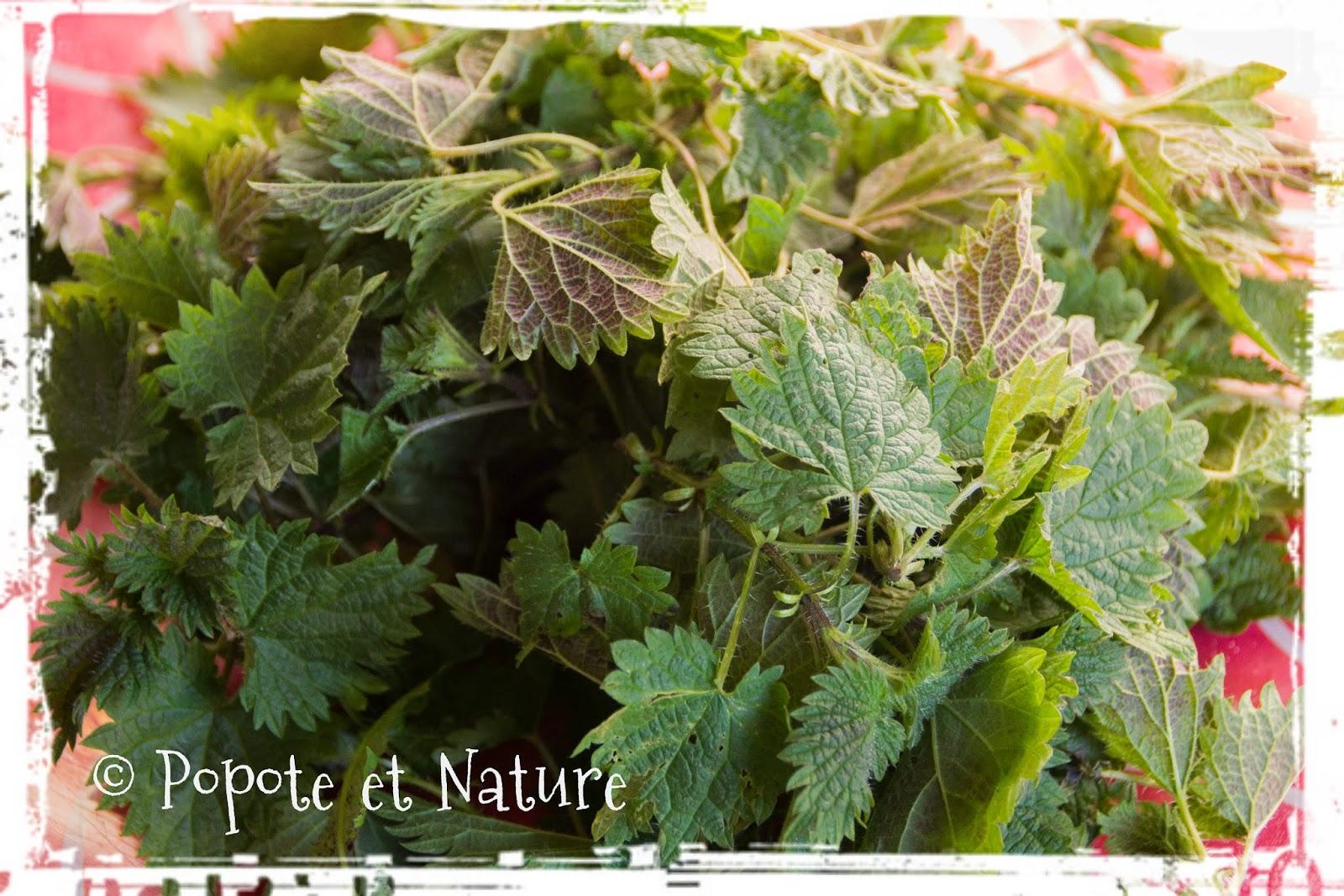 Popote et nature muffins aux orties et la fourme d 39 ambert - Bicarbonate de soude bienfait ...