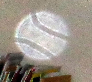 double striped orb