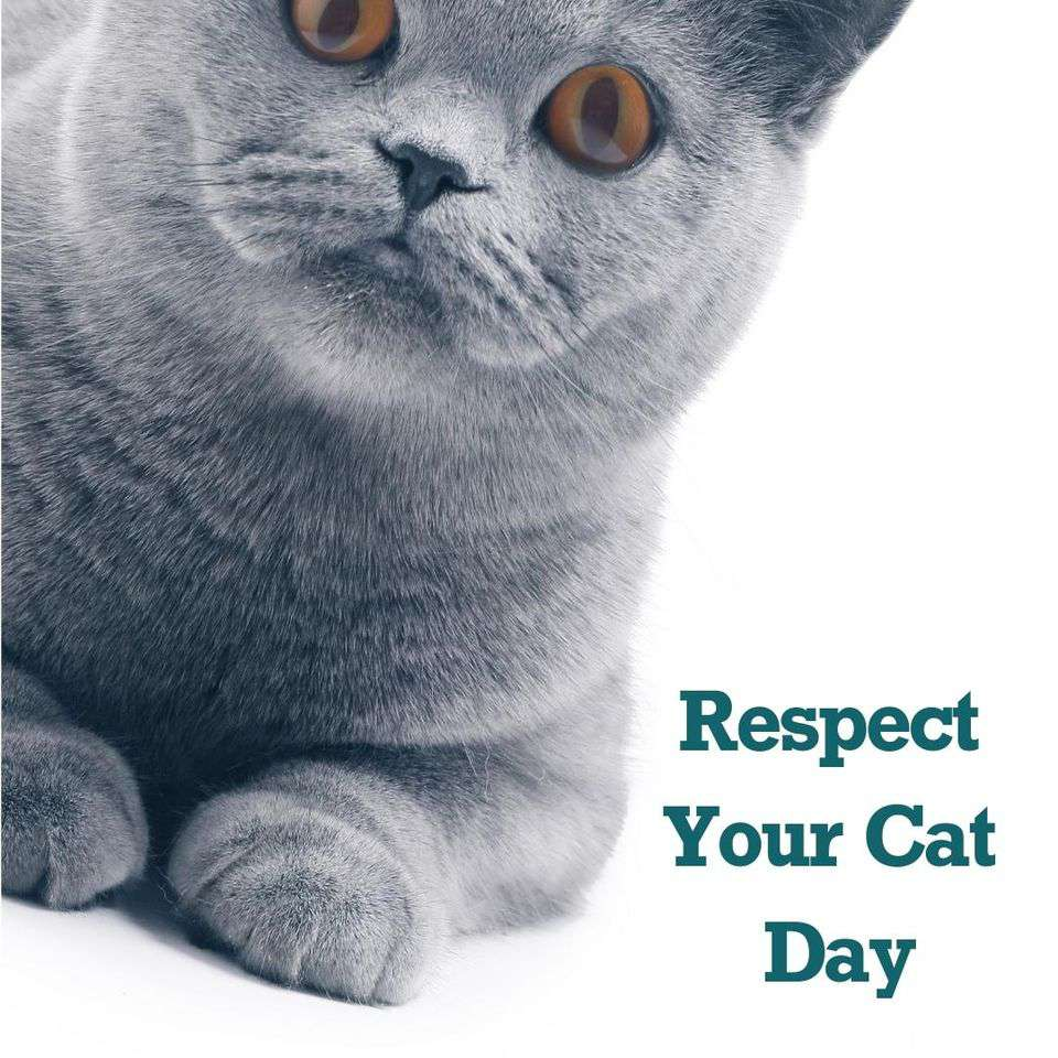 Respect Your Cat Day Wishes For Facebook