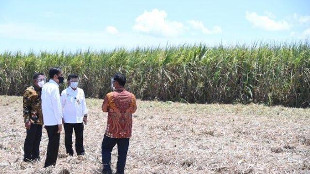 Istana Didemo Buruh, Jokowi Pergi ke Kebun Tebu