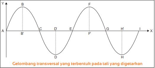 Gelombang transversal - Macam-Macam Gelombang Berdasarkan Arah Getarnya