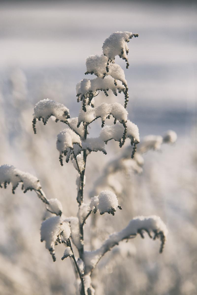 Joulu, jouluasetelma, asetelma, joulunodotus, talvi, lumi, outdoors, visitfinland, valokuvaus, luonto, luonnonmukainen, natural, decoration, visualaddictfrida, visualaddict, valokuvaaja, Frida Steiner, valokuvaus