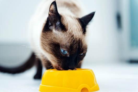 Mokre karmy Ontario dla kotów