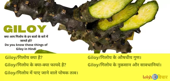 Do You Know these Benefits of Giloy in Hindi