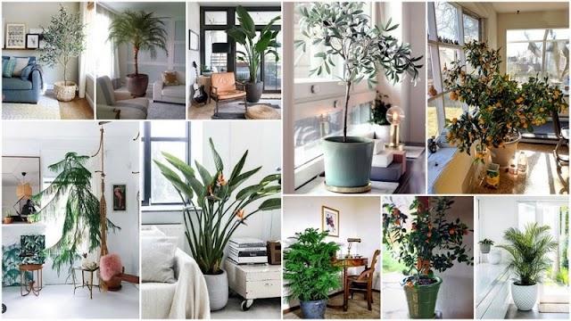 5 Δέντρα που μπορούν να αναπτυχθούν και σε Εσωτερικό Χώρο