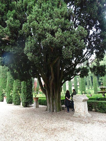 Memento solonico intermezzo domenicale palazzo e for Giardino e palazzo giusti