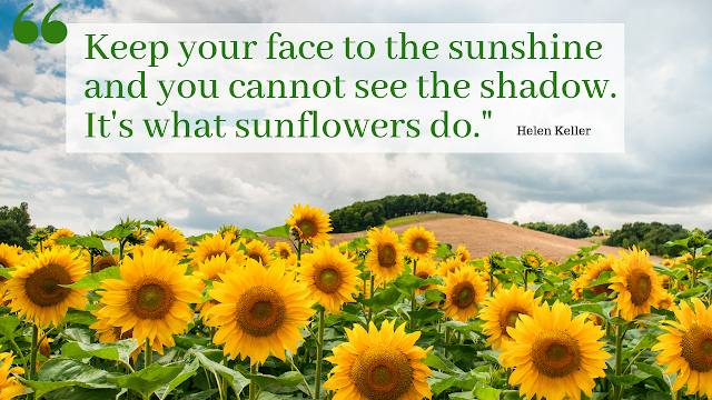 bulaklak na mirasol, sunflower