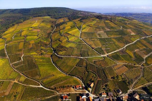 plots of land in Alsace wine region