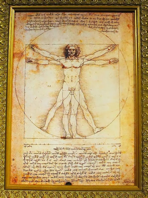 Da Vinci The Genius Exhibit The Mind Museum Vitruvian Man