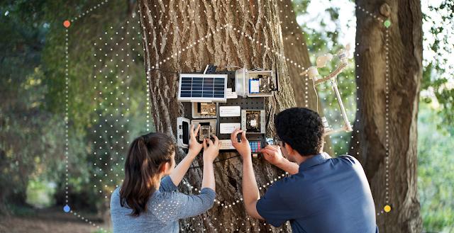 Zwei Menschen bringen Technik an einem Baum an