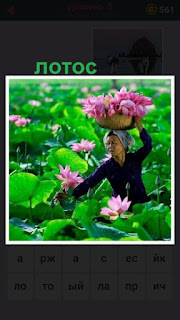 женщина собирает в корзину на голове лотос