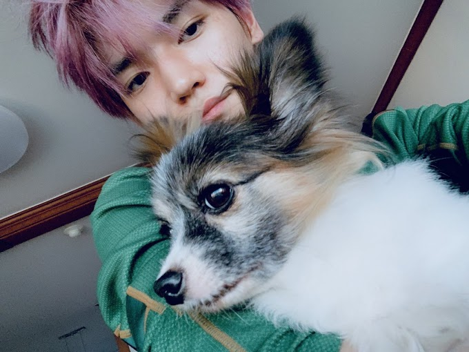 5 Songs Written by K-pop Idols About their Dogs