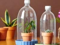 Cara Mudah Membuat Terrarium dari Botol Bekas, Tertarik Coba?