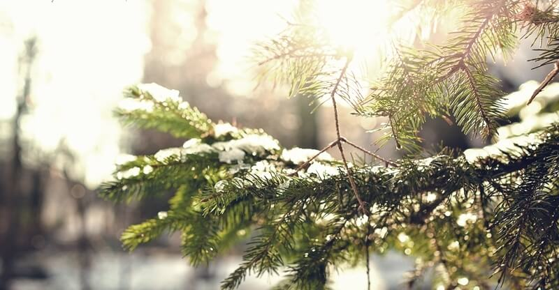 雨木散文故事,第一場雪