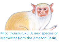 https://sciencythoughts.blogspot.com/2019/08/mico-munduruku-new-species-of-marmoset.html