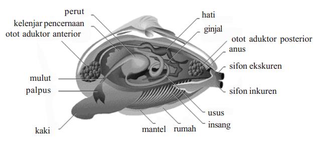 Peranan Mollusca
