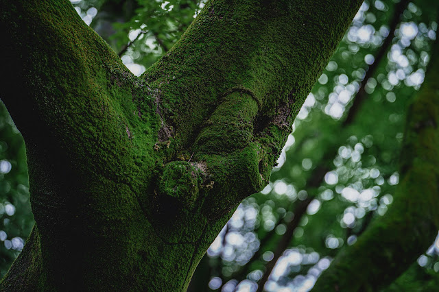 木,苔,玉ボケ,新緑