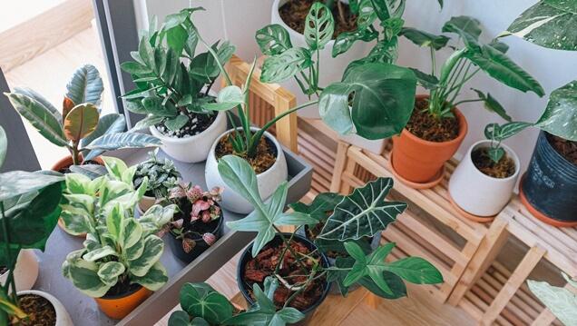 Aposte no verde - Decoração com plantas