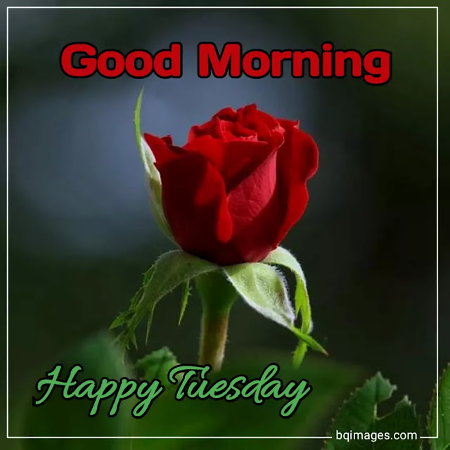 cute good morning tuesday images