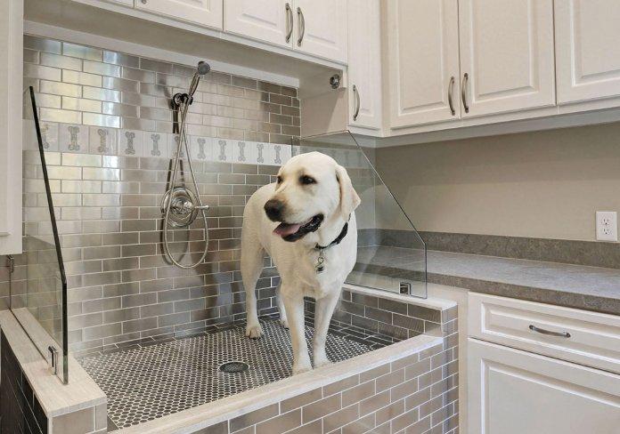Evde köpek şampuanı nasıl yapılır?