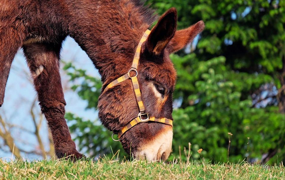 Pelajaran dari Keledai