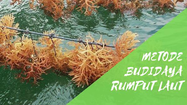 Metode Dalam Budidaya Rumput Laut